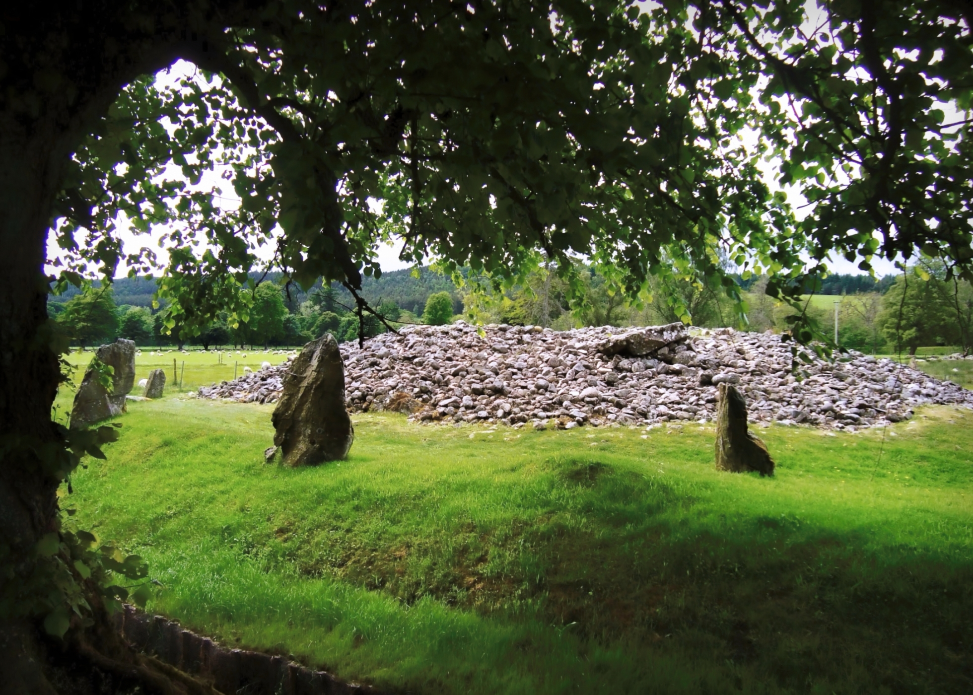 The prehistoric Clava Cairns burial chambers surrounded by standing stones and mature oak trees.