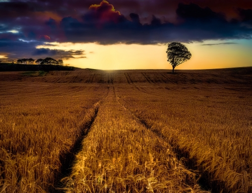 Lughnasadh, Lunastal or Lammas: The Celtic Harvest Festival