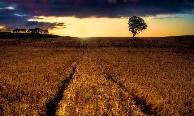 Lughnasadh, Lunastal or Lammas: The Celtic Harvest Festival