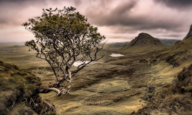 The Lore of the Scottish Rowan Tree