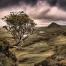 A Rowan Tree looking over the Quirang on the Isle of Skye.