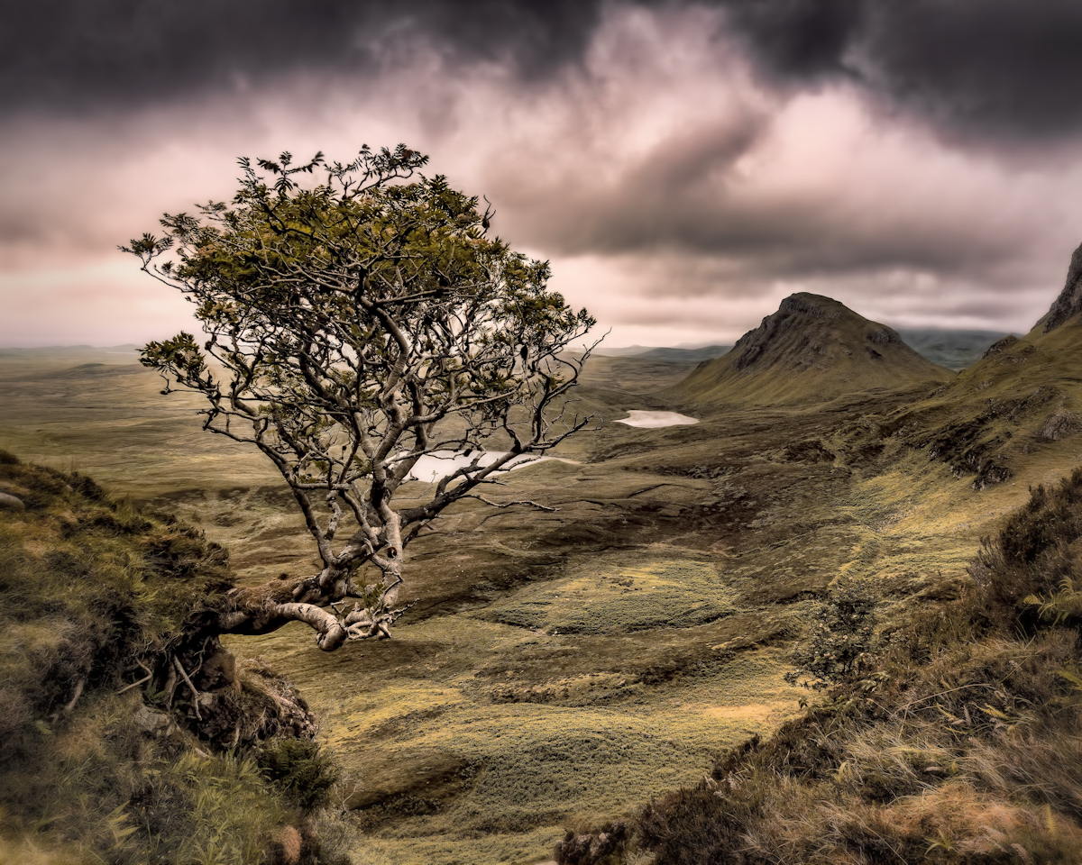 A Rowan Tree looking over the Quirang on the Isle of Skye.